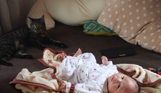 【プレママへ】猫は赤ちゃん好き?赤ちゃんと猫の同居について気になる6つのギモン