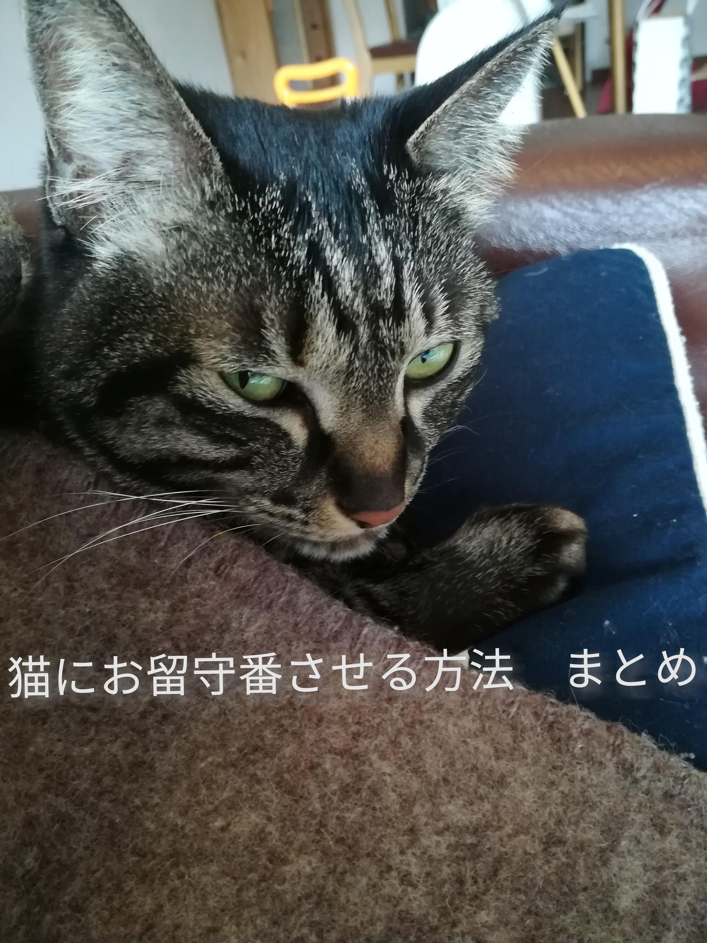 【ペットのお留守番】一泊二日くらいなら余裕?!猫にお留守番させる方法。