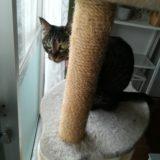 猫が絶対喜ぶキャットタワーならコレ!丈夫で長く使えるおすすめタワー