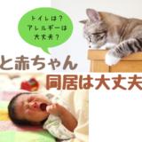 トイレはどこに置く?トキソプラズマは大丈夫?赤ちゃんと猫の同居について気になる6つのギモン