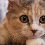 【猫の粗相】おしっこされたカーペットの汚れと臭いをとるには?