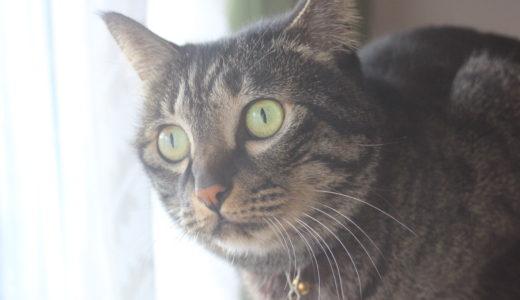 【猫がマンションから脱走!】猫の探し方のコツと探し出すためにするべき4つのコト
