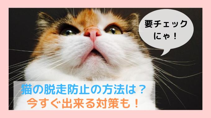 猫の脱走防止は どんなふうにする?
