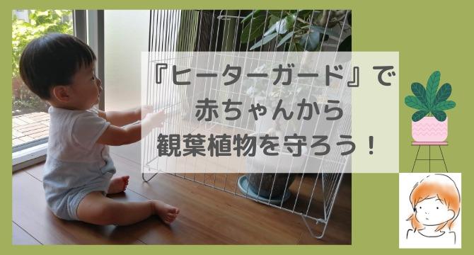観葉植物 赤ちゃん