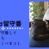 猫 留守番