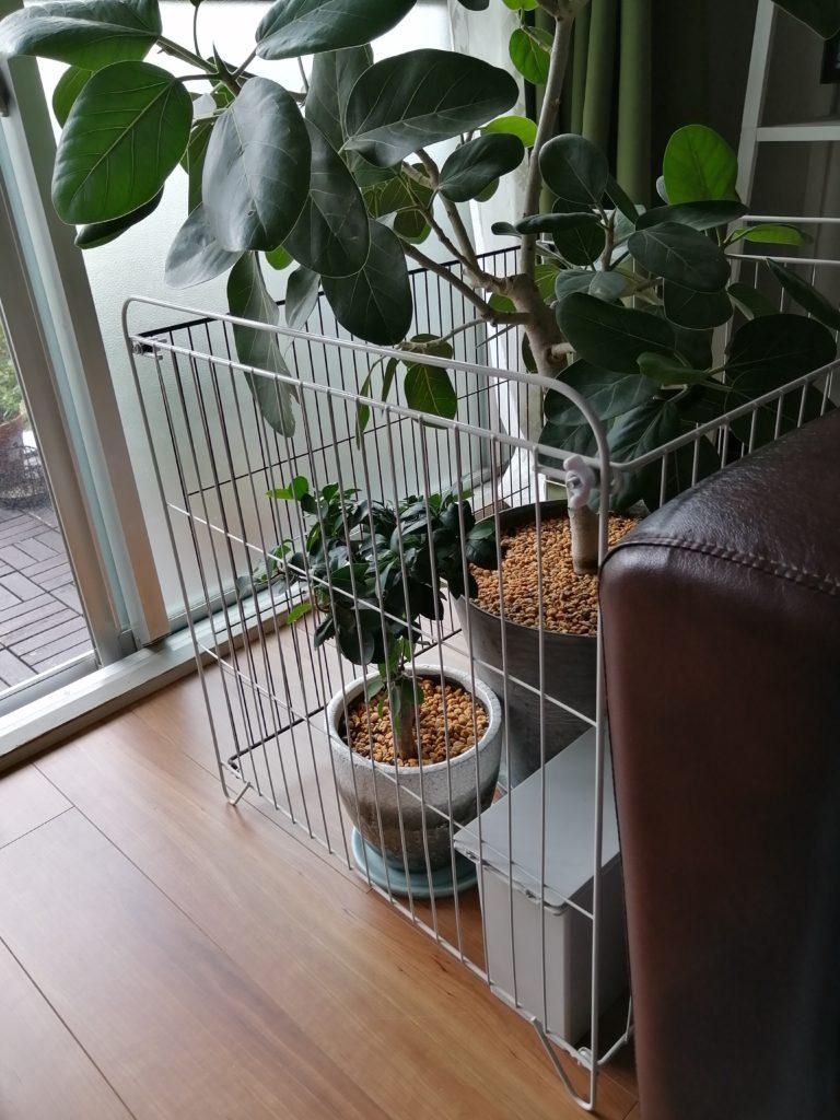 ヒーターガード 観葉植物